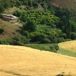 Les moissons arrivent près du gite-Ourthane
