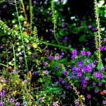 Flore du Maroc au gite-ourthane